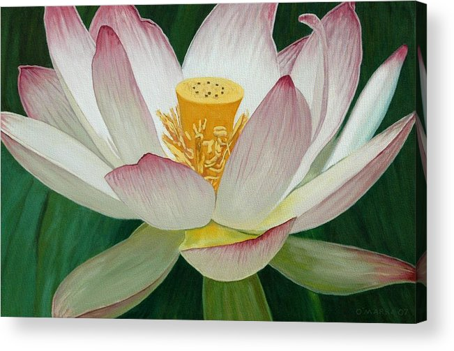 Flower Acrylic Print featuring the painting Lotus Of Awakening by Allan OMarra