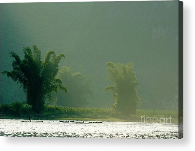 Asia Acrylic Print featuring the photograph Lush Bamboo Trees On The Banks Of The Li Jiang River In Yangshuo by Sami Sarkis