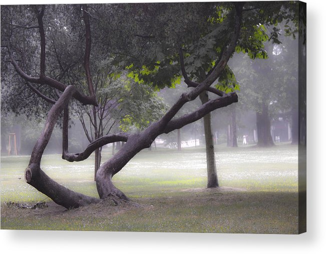 Forest Acrylic Print featuring the photograph Magic Forest by Hans English