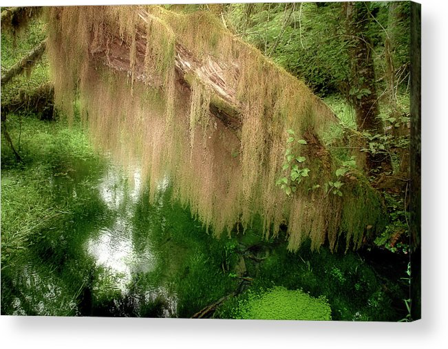 Rainforest Acrylic Print featuring the photograph Magical Hall Of Mosses - Hoh Rain Forest Olympic National Park Wa Usa by Christine Till