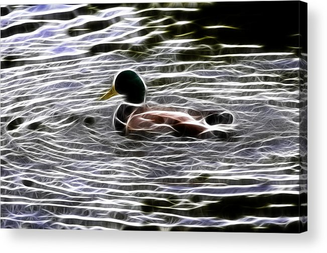 Bird Acrylic Print featuring the photograph Mallard Duck - Fractal by Lawrence Christopher