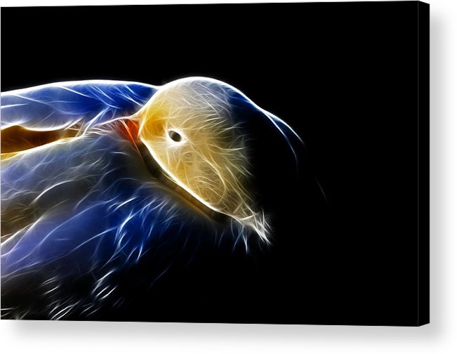 Bird Acrylic Print featuring the photograph Mallard Duck Fractal by Lawrence Christopher