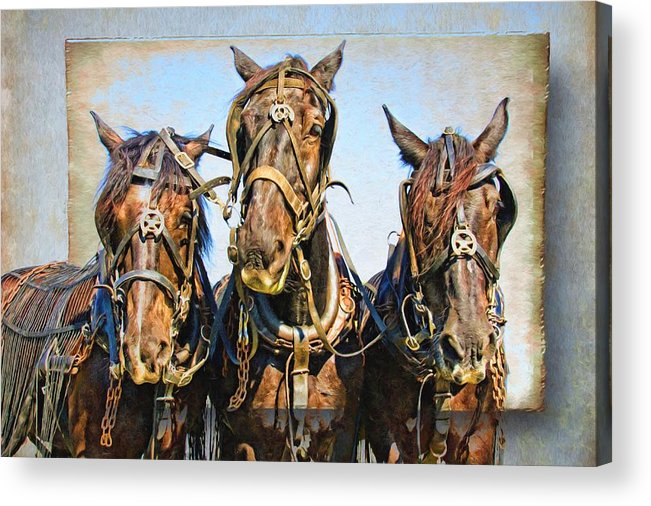 Alicegipsonphotographs Acrylic Print featuring the photograph Mary's Team by Alice Gipson