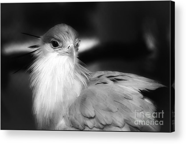 Black And White Acrylic Print featuring the photograph Miss Maybelline by Nancy Forehand