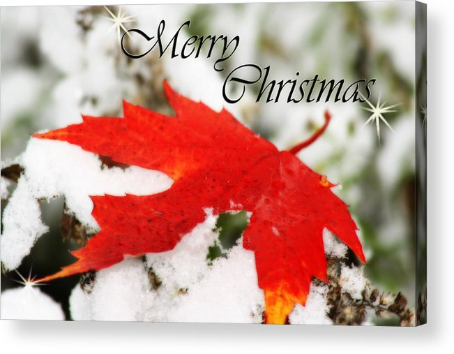 Christmas Card Acrylic Print featuring the photograph Merry Christmas Leaf by Cathy Beharriell