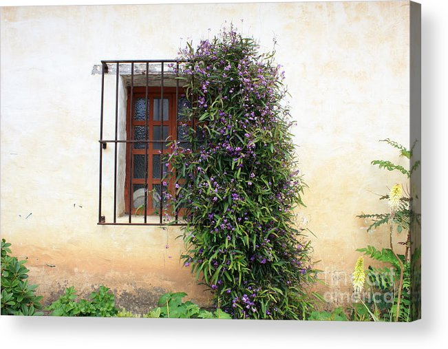 Purple Flowers Acrylic Print featuring the photograph Mission Window With Purple Flowers by Carol Groenen