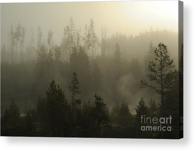 Fog Acrylic Print featuring the photograph Misty Morning by Dennis Hammer