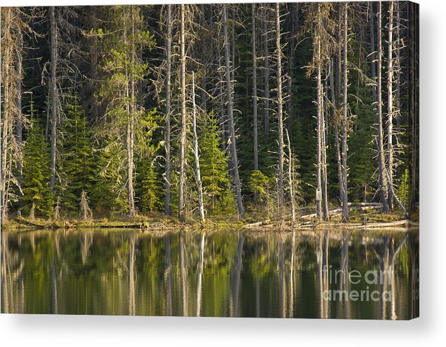 Trees Acrylic Print featuring the photograph Moose Creek Reservoir by Idaho Scenic Images Linda Lantzy