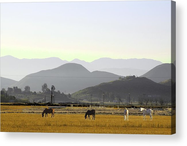 Morning In Country Acrylic Print featuring the photograph Morning In Country by Viktor Savchenko