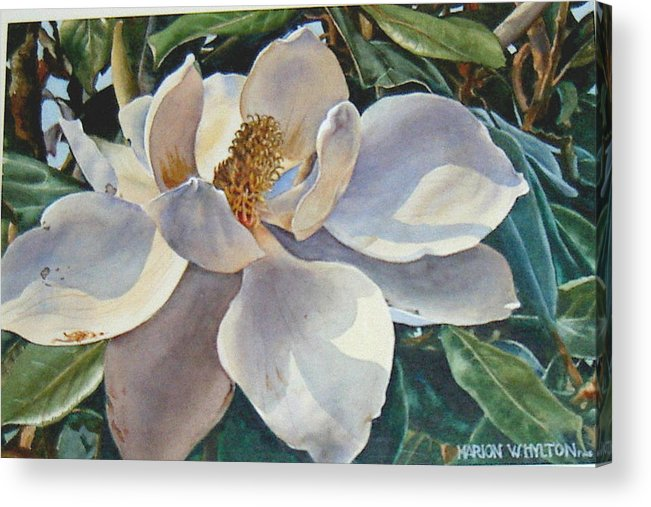 Flower Acrylic Print featuring the painting Morning Magnolia by Marion Hylton