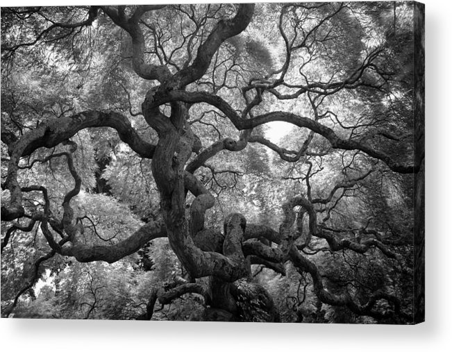 Tree Acrylic Print featuring the photograph Motivations by Mitch Cat