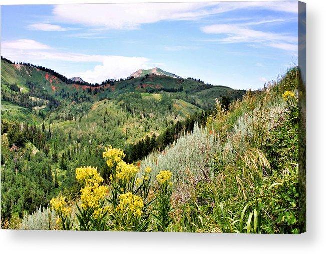 Mountain Acrylic Print featuring the photograph Mountain Meadows by Kristin Elmquist