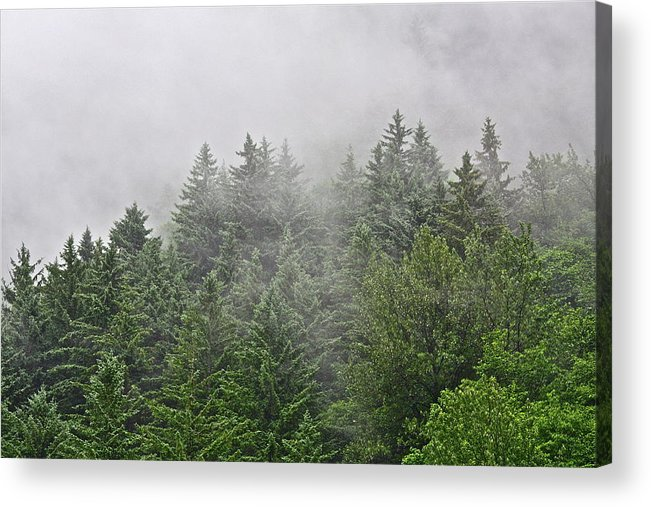 Trees Acrylic Print featuring the photograph Mountain Mist by Diana Hatcher