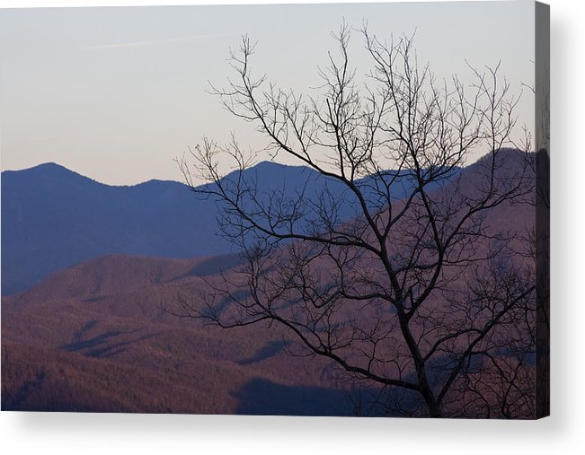 Tree Mountain Mountains Sun Sunset Sky Winter Smoky Park National Acrylic Print featuring the photograph Mountain Tree by Andrei Shliakhau