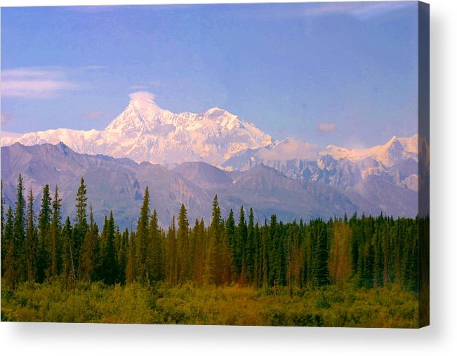 Mckinley Mountain Pines Snow Alaska Acrylic Print featuring the photograph Mt Mckinley 125 Miles Away by Jack G Brauer