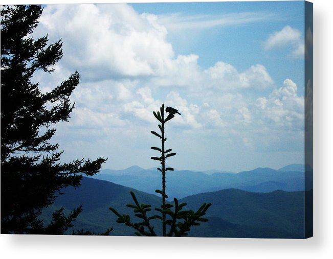 Blue Ridge Mountains Acrylic Print featuring the photograph My Mountain Bird by Patricia Motley