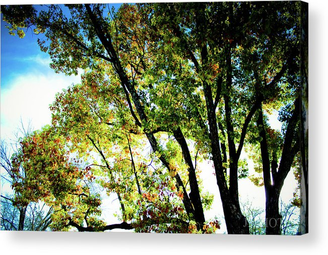 Mystical Tree Acrylic Print featuring the photograph Mystical Tree by Jonah Vang