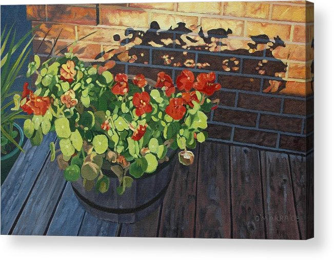 Flowers Acrylic Print featuring the painting Nasturtiums In Late Light by Allan OMarra