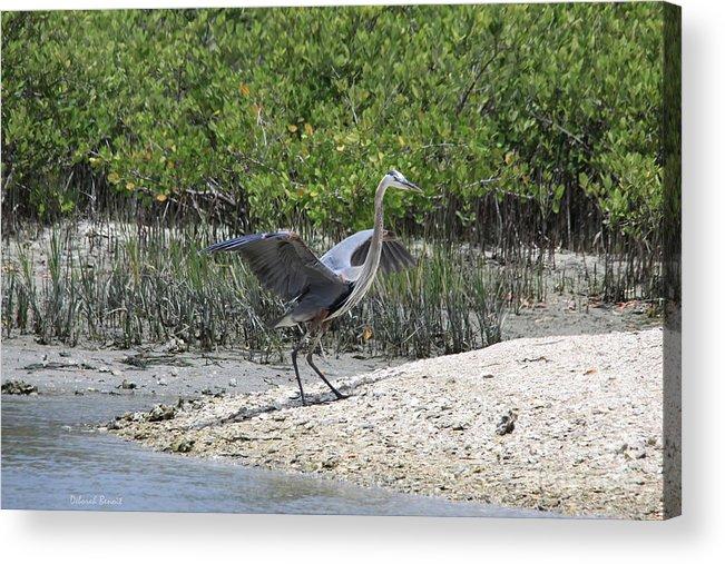 Blue Heron Acrylic Print featuring the photograph Nature In Florida by Deborah Benoit
