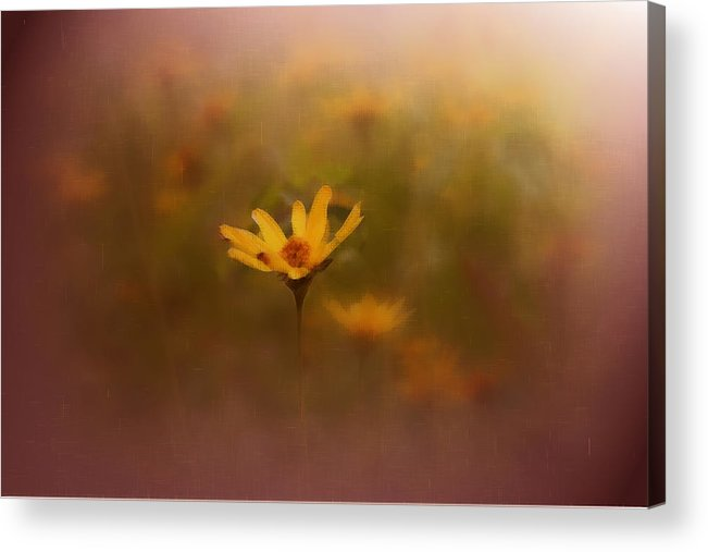 Nature Acrylic Print featuring the photograph Nature by Linda Sannuti