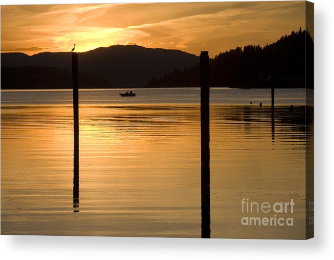 Bird Acrylic Print featuring the photograph Natures Spotlight by Idaho Scenic Images Linda Lantzy