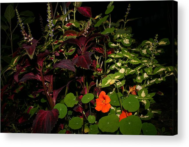 Flower's Acrylic Print featuring the photograph Night Flower's by Kevin Dunham