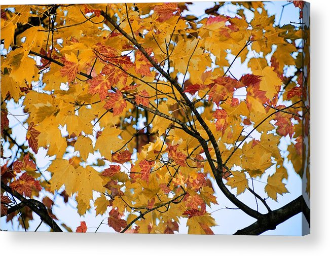 Autumn Acrylic Print featuring the photograph November Twilight by JAMART Photography