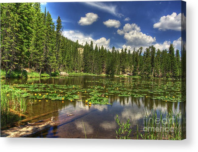 Nymph Acrylic Print featuring the photograph Nymph Lake 2 by Pete Hellmann