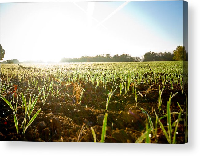Oats Acrylic Print featuring the photograph Oats Sunrise by Tim Fitzwater