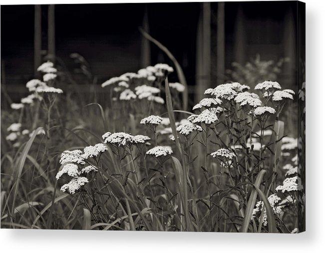 Flowers Acrylic Print featuring the photograph Oklahoma Prairie Flowers by Toni Hopper
