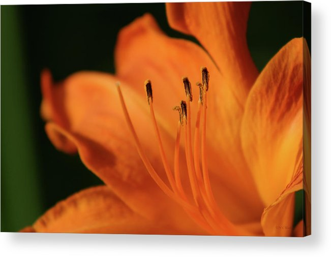 Orange Acrylic Print featuring the photograph Orange Wave 3096 H_2 by Steven Ward