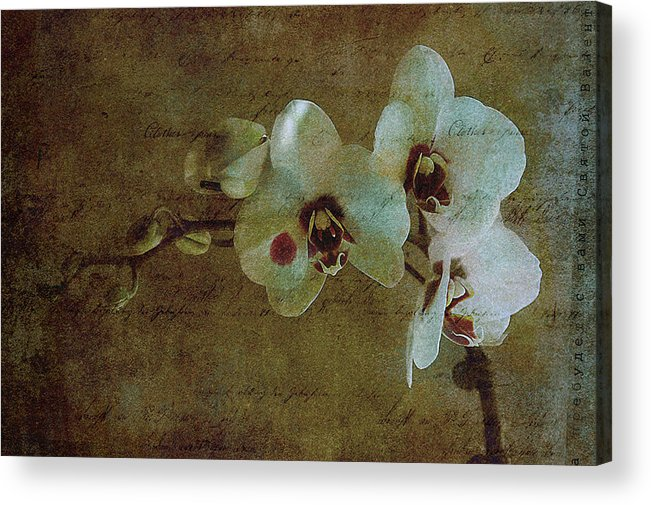 Orchid Acrylic Print featuring the photograph Orchid by Inesa Kayuta