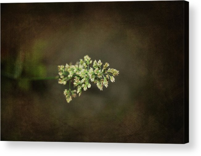 Flower Acrylic Print featuring the photograph Out Of The Fog by Rozalia Toth