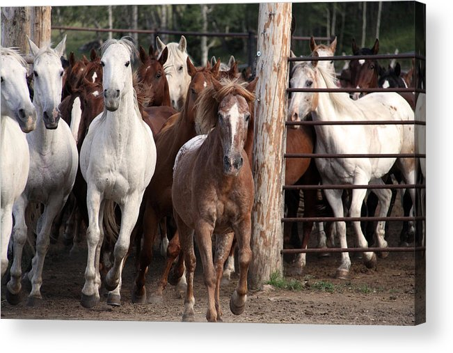 Animals Acrylic Print featuring the photograph Out The Gate by MH Ramona Swift
