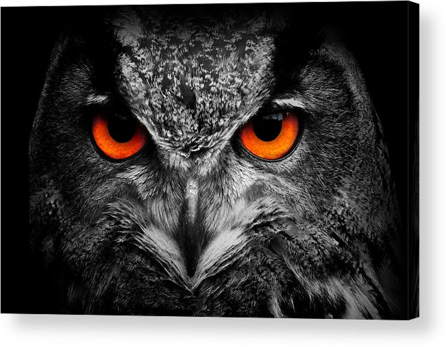 Owl Acrylic Print featuring the photograph owl by Travis Simpler