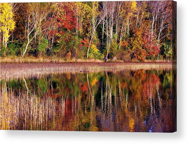 Autumn Acrylic Print featuring the photograph Paint Like Nature by Mitch Cat