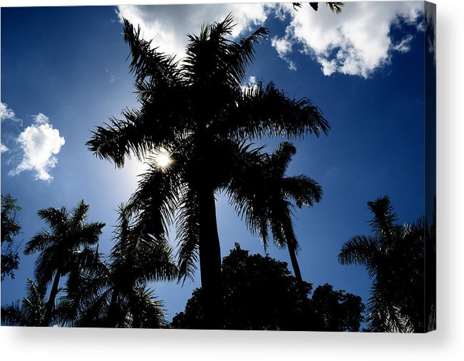 Palm-trees Acrylic Print featuring the photograph Palm Trees In Silhouette by Reva Steenbergen
