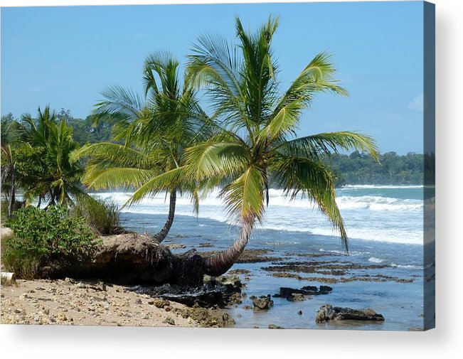 Palm Trees Acrylic Print featuring the photograph Palms On Ocean by Sue Law