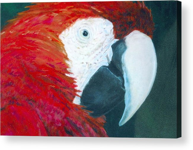 Parrot Acrylic Print featuring the painting Parrot by Deena Greenberg