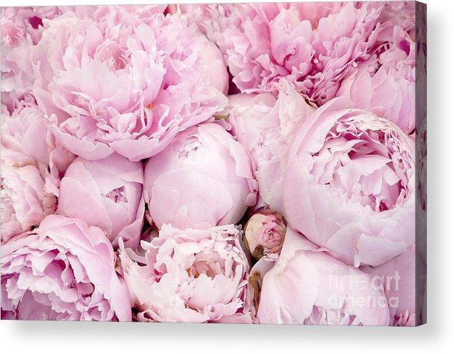Pastel pink peony flowers pink peony decor peonies shabby chic peonies acrylic print featuring the photograph pastel pink peony flowers pink peony decor peonies mightylinksfo