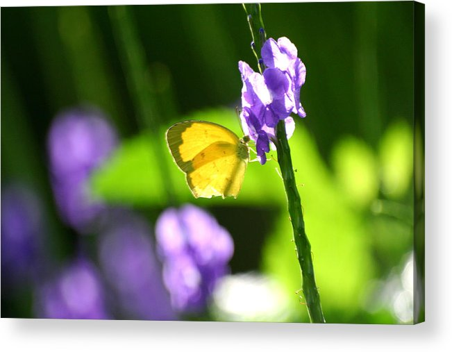 Insect Acrylic Print featuring the photograph Perfect Imperfection by Mark Mah