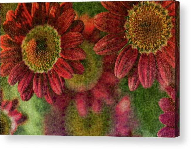 Mixed Media Acrylic Print featuring the photograph Petals On Parade by Bonnie Bruno