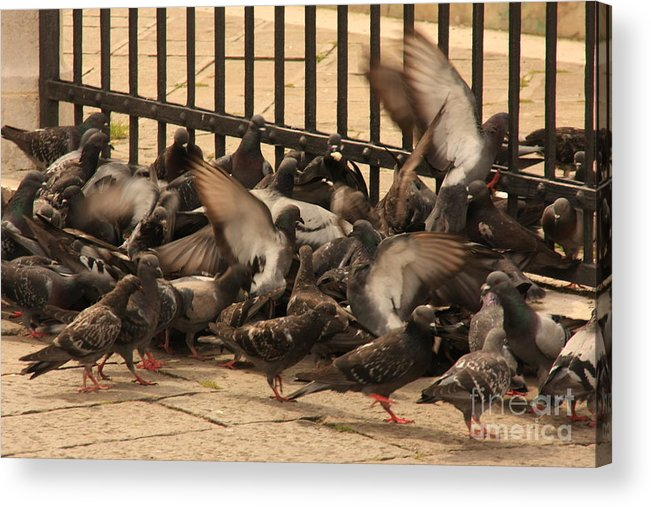 Birds Acrylic Print featuring the photograph Pigeons In Venice by Michael Henderson