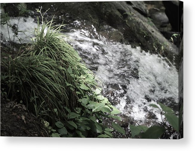 Plants Acrylic Print featuring the photograph Plants By The River by Hannah Tanner