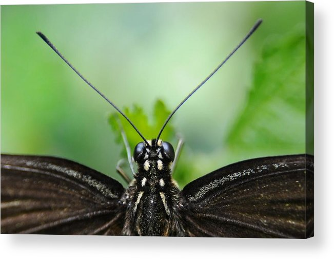 Macro Acrylic Print featuring the photograph P.o.v. by Dan Holm