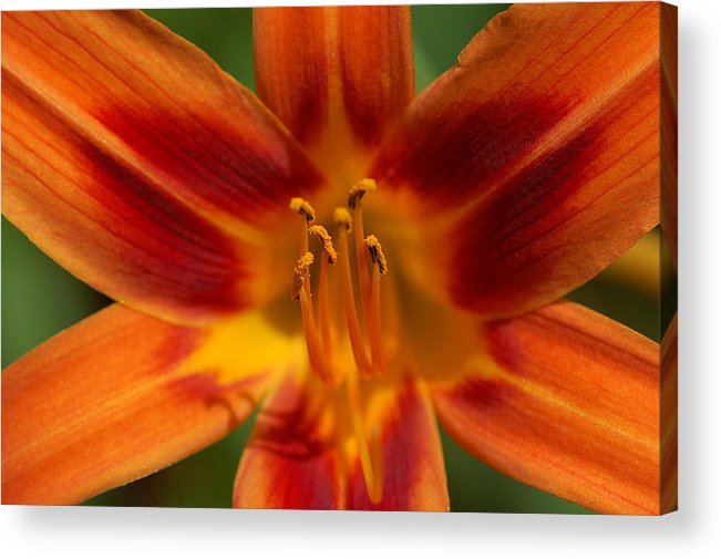 Nature Acrylic Print featuring the photograph Precious Treasure by Mandy Wiltse