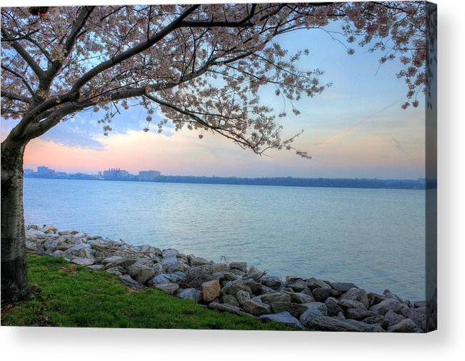 Cherry Blossoms Blossom Washington Dc Potomac River Sunrise Sunset Joint Base Anacostia Bolling Afb Alexandria Va Virginia Acrylic Print featuring the photograph Pretty Potomac by JC Findley