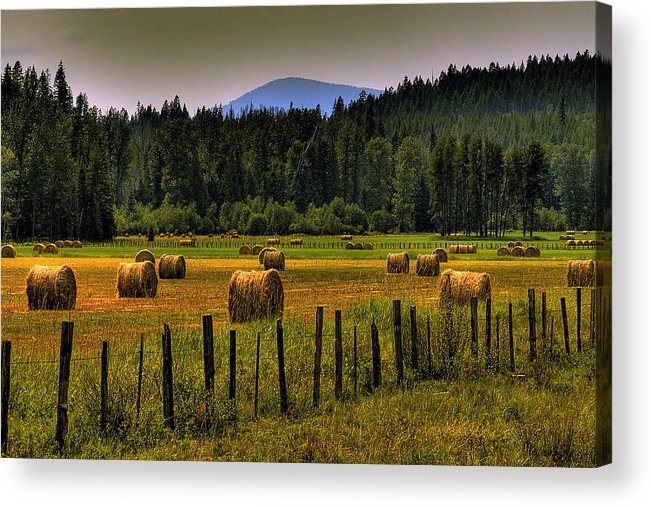 Priest Lake Acrylic Print featuring the photograph Priest Lake Hay Bales II by David Patterson