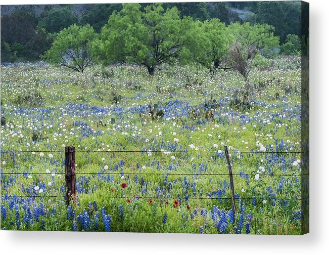 Cactus Acrylic Print featuring the photograph Private Property -wildflowers Of Texas. by Usha Peddamatham