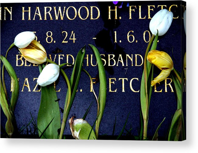 Photographer Acrylic Print featuring the photograph Protective Tulips by Jez C Self